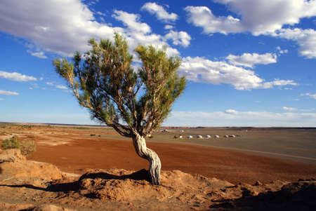 Tree in Mongolia, Gobi desert photo