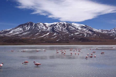 Laguna celeste in atacama desert, Flamingos, Bolivia photo