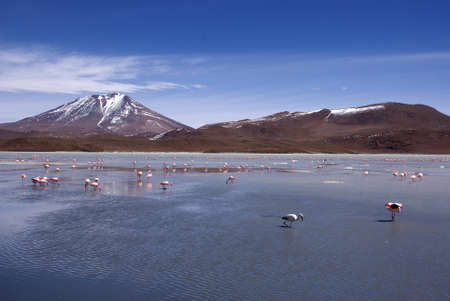 Laguna celeste in atacama desert, Flamingos, Bolivia Stock Photo - 11994632