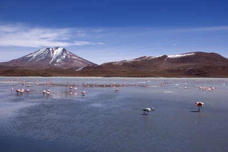 Laguna celeste in atacama desert, Flamingos, Bolivia Stock Photo - 11994632