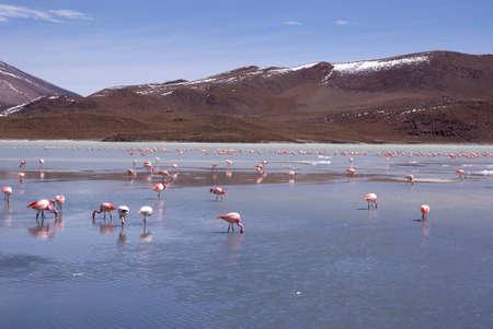 Laguna celeste in atacama desert, Flamingos, Bolivia Stock Photo - 11994635