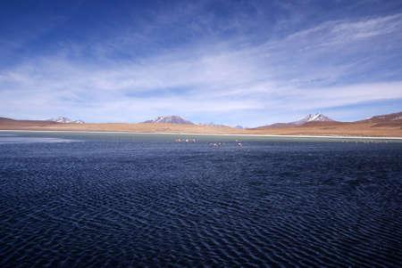 Laguna celeste in atacama desert, Flamingos, Bolivia photo