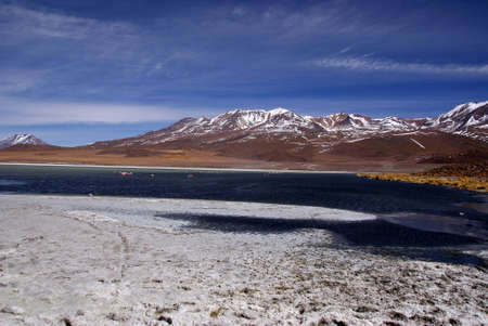Laguna celeste in atacama desert, Flamingos, Bolivia Stock Photo - 11994643