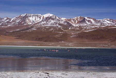 Laguna celeste in atacama desert, Flamingos, Bolivia Stock Photo - 11994640