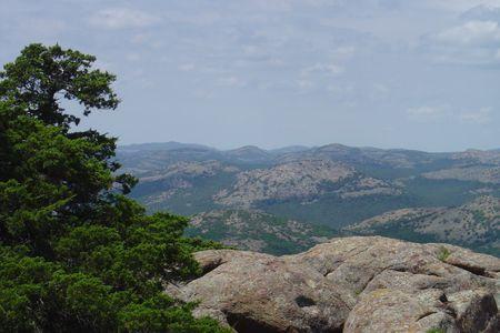 cima montagna: Vento spazzato Cedar albero sulla cima di montagna  Archivio Fotografico