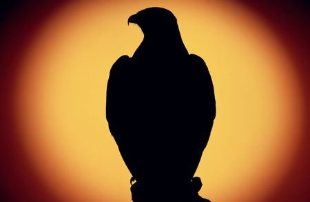 the setting sun: buzzard (buteo buteo) against  setting sun Stock Photo