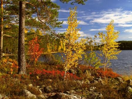 finland: ruska (fall colours) in koli national park, finland       Stock Photo