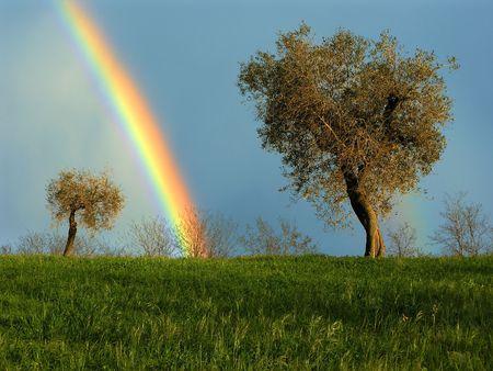 olijfbomen en regenboog in het landschap in het voorjaar