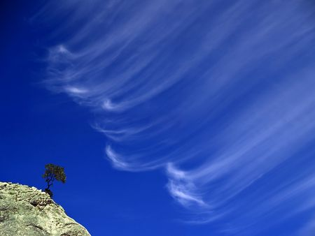 cirrus: solitary tree and cirrus clouds