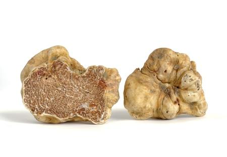 truffle: close-up of white truffle (tuber magnatum) isolated on white Stock Photo