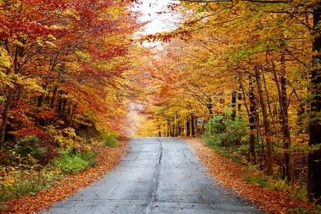 maple: Rainy autumn afternoon on a country road located in Quebec, Canada. Stock Photo
