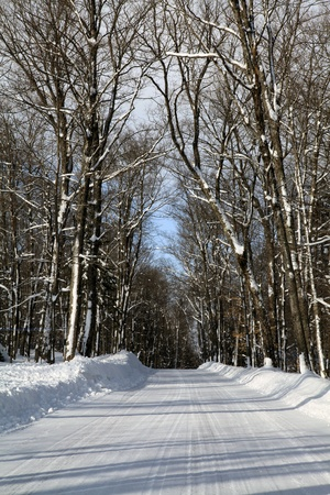 Winter in the sugar bushes photo