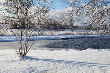 cedars: Winter scene located in Quebec, Canada