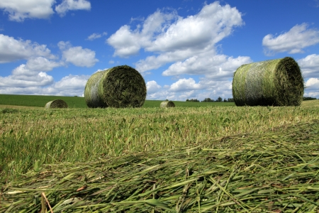 Freshly rolled bales of hay in a field located in Quebec, Canada  photo