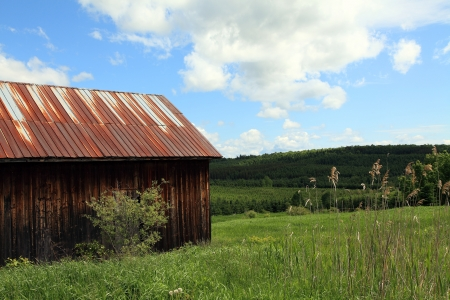 Old abandoned shed in field located in Quebec, Canada  photo