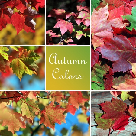 Autumn colors montage photo