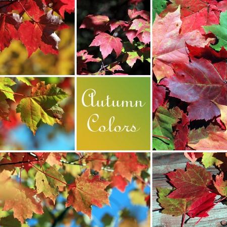 Autumn colors montage