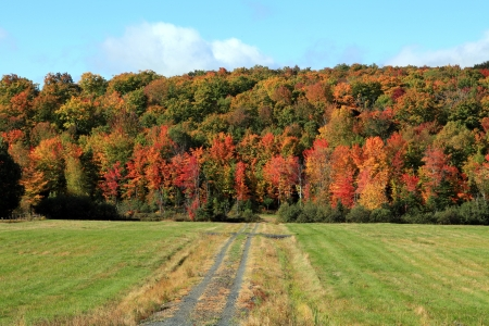 sugar maple: Beautiful vibrant morning in the countryside
