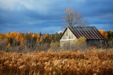 canada agriculture: Old abandoned barn in a field located in Quebec, Canada on a cloudy autumn day