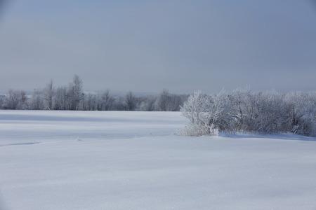 frozen trees: Frozen trees in the field Stock Photo