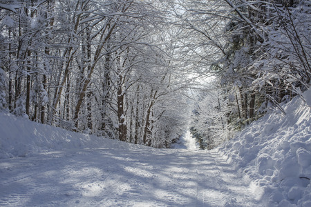 Beautiful winter road in the sugar bushes
