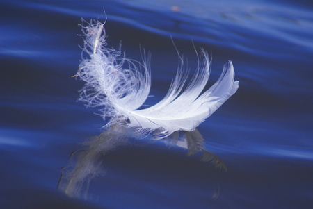 This is a beautiful white contour bird feather. 写真素材