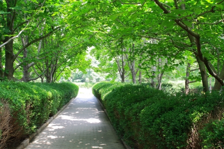 Many trees on both side of the path in park. Stock Photo