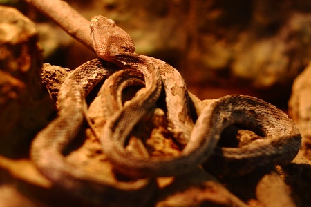 coldblooded: Closeup of a snake Stock Photo