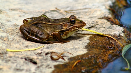 beneficial insect: frog