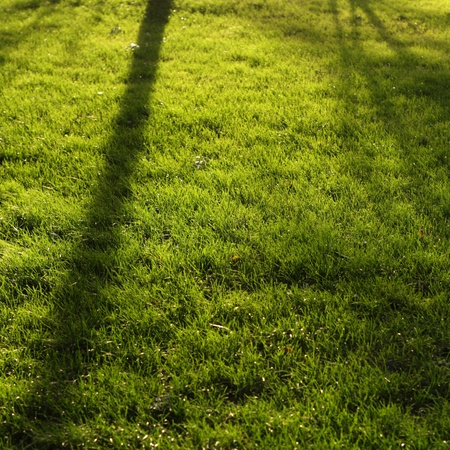 Shadow on the lawn
