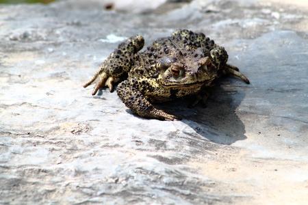 Closeup of toad Stock Photo