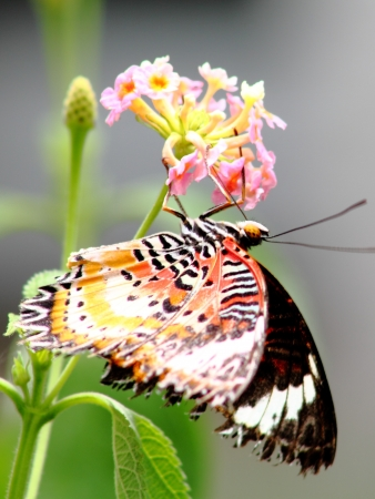 exaggerate: Butterfly