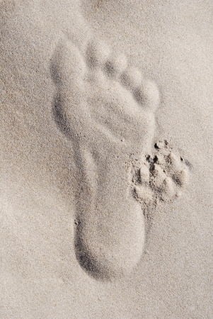 Human and dog footprints in the sand.