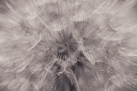 Abstract macro photo.Dandelion seed.Artistic Background for desktop.