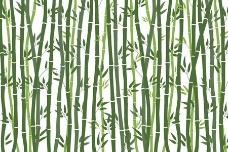 Abstract background - bamboo forest. Green drawing of bamboo stalks on a white background. Plant texture. Vector illustration