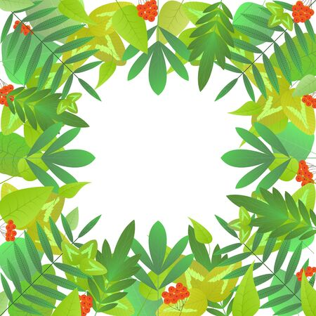 Square frame of green leaves of different types of trees and bunches of rowan on a white background. Leaves under the mask, can be used separately. Blank for advertising card or invitation. Vector