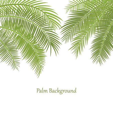 Decorative frame with palm leaves. Green palm tree branches hang from above. White background with place for an inscription. Minimalistic style. Vector flat illustration. Elements under clipping mask 向量圖像
