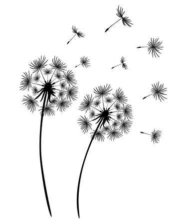 Set of dandelions. Black silhouette of two dandelions on a white background. Floral patterns, clipart. Spring flower with flying seeds. Vector illustration. Monochrome drawing. Vektorgrafik