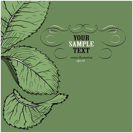 Green leave background Stock Vector - 8986459