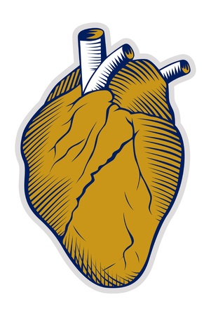anatomical model: human heart icon Illustration