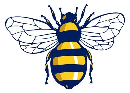 abeja: insectos abeja