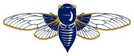 cicada: insect cicada