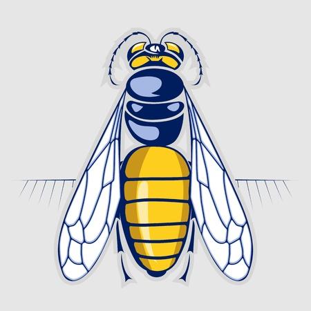 abeja reina: miel de abeja picadura de un insecto con rayas Vectores