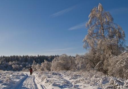Christmas walk photo
