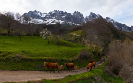beautiful landscape with mountains and a herd of cows in the spring photo