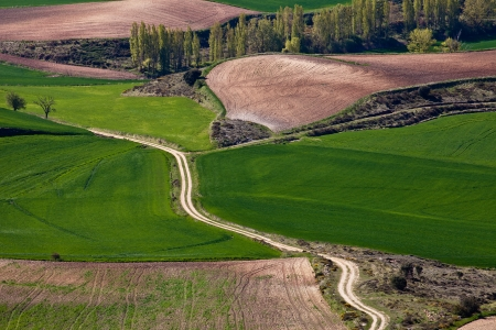 arable land: Texture field with arable land
