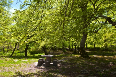 A picnic in the spring sunshine forest photo