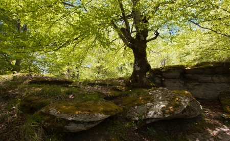 In the spring woods, penetrated by the light photo