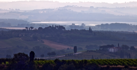 Vineyard in Tuscany in the early morning photo