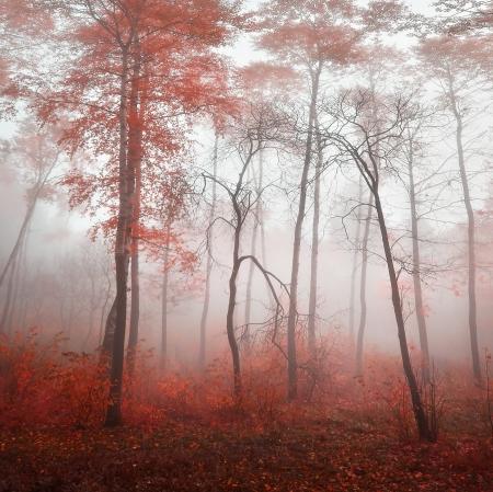 red Wald im Nebel